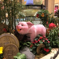 Year of the Pig [from Vegas]